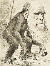 Editorial cartioon from 1871 depicting Charles Darwin as an Ape